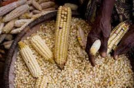 TRADE: Uganda Maize Exports Into Kenya Increase Fivefold