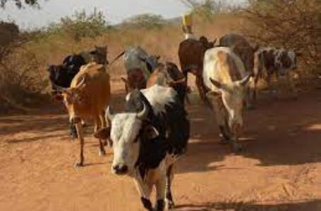 IN OFFING: Rangelands Management Policy To Address Degradation And Bio Diversity Conservation