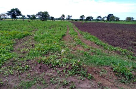 READY: Lango Farmers To Match To State House Over delayed released of funds by Microfinance Support Center