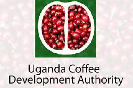 AT ODDS: Breach Of New Coffee Law Cited As UCDA 'Boss' Seeks Nomination For Board Members